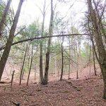 main-trees-flat