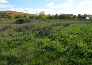 commercial-land-richford3