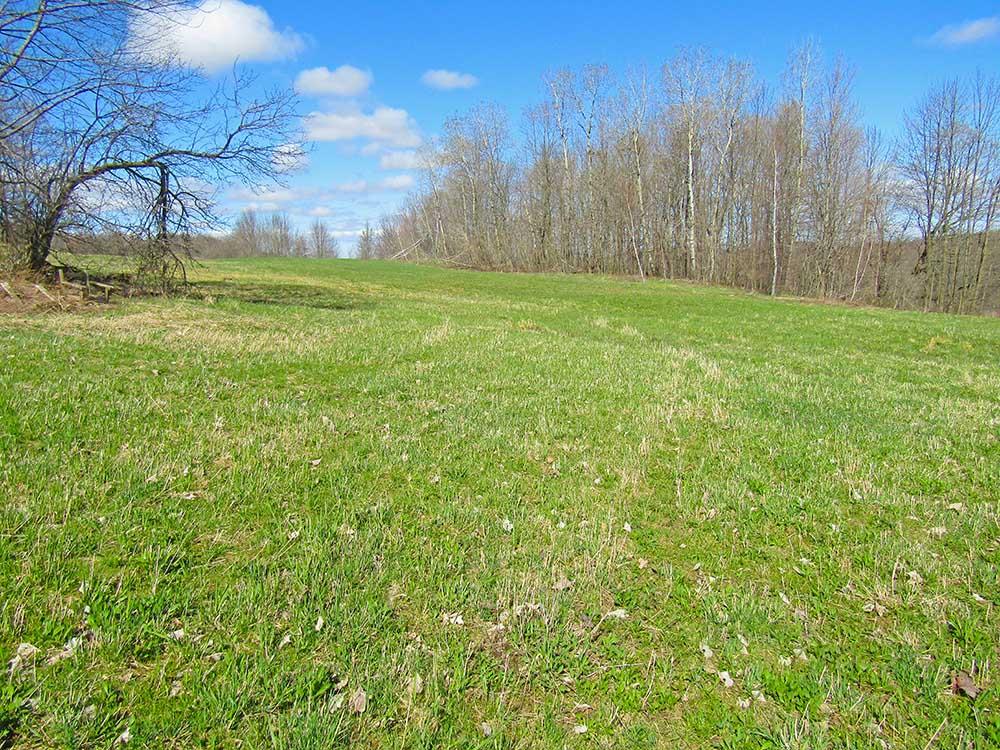 tree-field