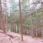 trees-downhill