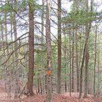 trees-top